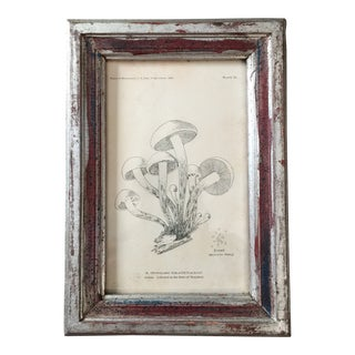 1890s Mushroom Toadstool Lithograph, Framed For Sale