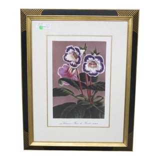Neoclassical Framed Floral Print by W. King Ambler For Sale