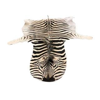Equus Burchelli Zebra Skin Rug