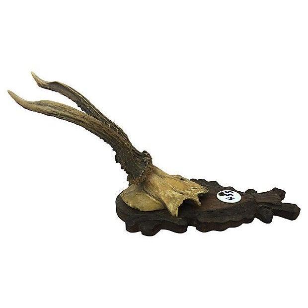 Vintage Deer Antler Trophy - Image 3 of 4