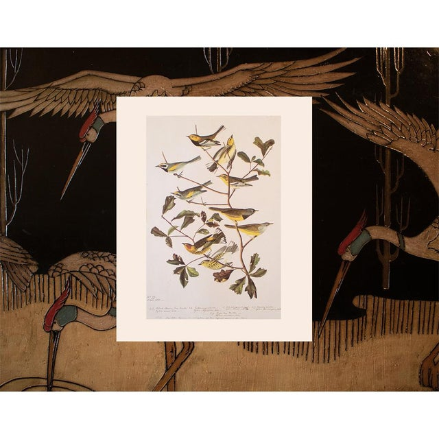 1960s American Warblers by John James Audubon, Vintage Cottage Style Print For Sale - Image 5 of 8