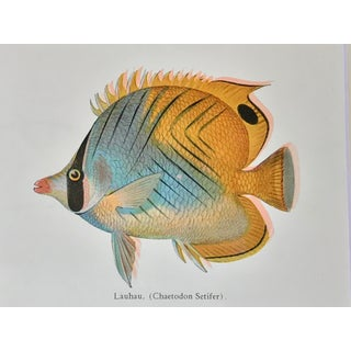 Vintage Chromolithograph Hawaiian Fish c. 1940 Preview