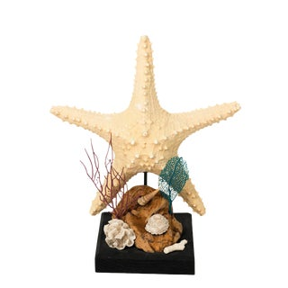 Nautical Shell Display With Starfish For Sale