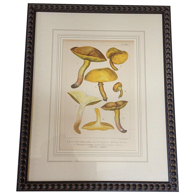 Botanical Lithograph of Yellow Mushroom For Sale