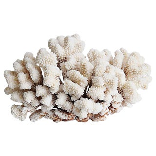 Large Natural Ocean Sea Coral Specimen