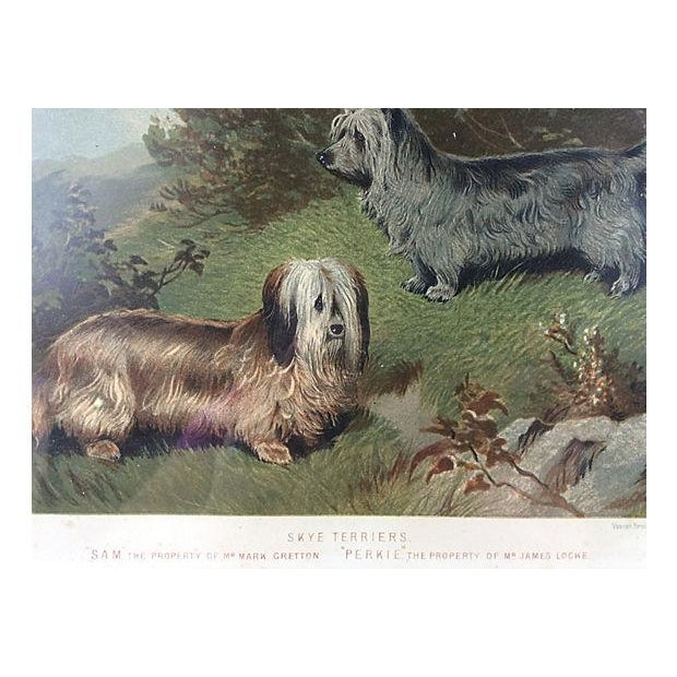 1891 Chromolithograph of Skye Terriers - Image 2 of 2
