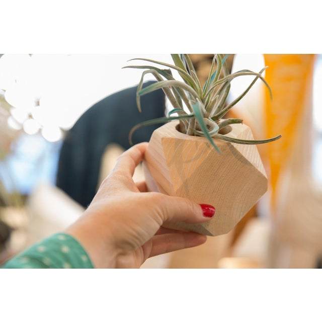 :: Handmade right here in house at ONH in Katonah NY, this geometric wood succulent holder is made from cedar, sanded and...