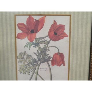 1990s Framed & Matted Tulip Print Preview