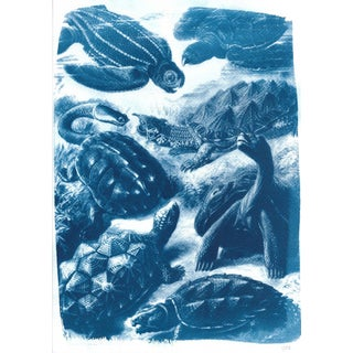 Ernst Haeckel Cyanotype Print of a Botanical Scene With Different Types of Turtles, Vintage Drawing, Best Decor Print, Botany Art, Art Print For Sale