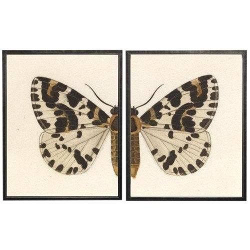 """Split White, Black, and Brown Butterfly - 46"""" X 29"""" For Sale"""