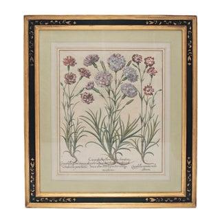 """Basil Besler """"Caryophyllus Flore"""" Botanical Print For Sale"""