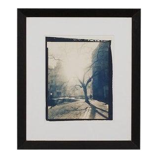 Framed Tree Giclée of a Cyanotype For Sale