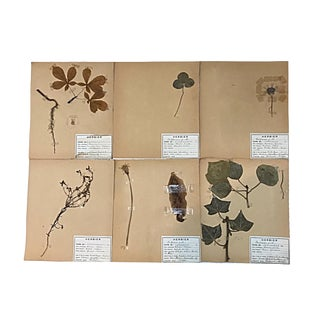 20th Century Vintage French Herbier Pressed Botanicals Unframed - Set of 6 For Sale