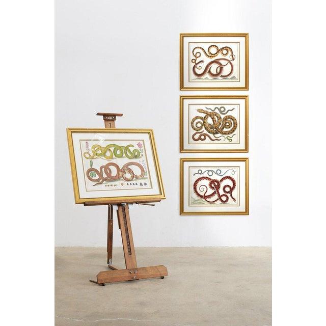 Set of Four Albertus Seba Hand-Colored Snake Prints For Sale - Image 12 of 13