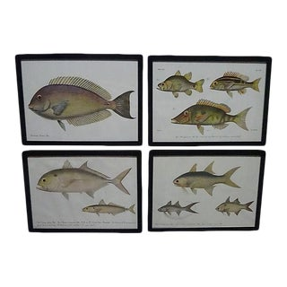 1862 Pieter Bleeker Exotic Fish Prints - Set of 4 For Sale