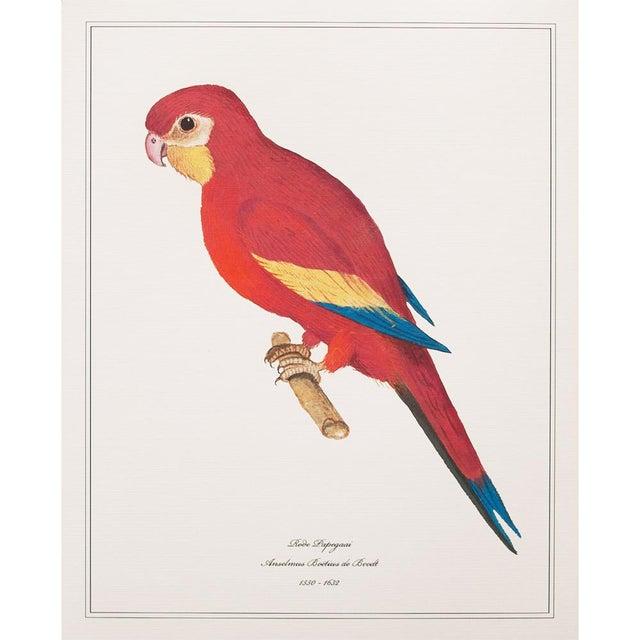 1590s Anselmus Boëtius De Boodt, Parrots - Set of 9 For Sale - Image 10 of 13