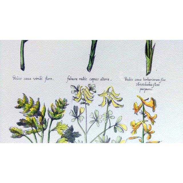 Botanical Print by Emanuel Sweert - Image 5 of 6
