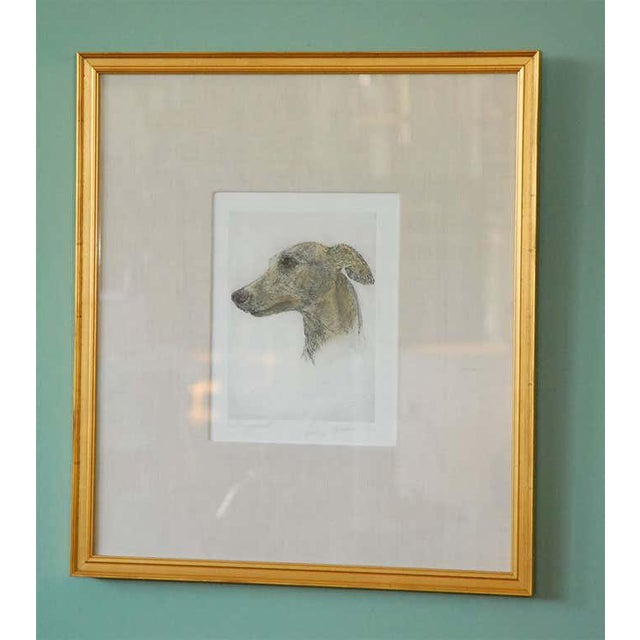 Portraiture Colored Etching of Whippet Hunting Dog For Sale - Image 3 of 8