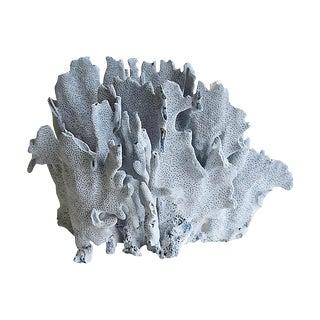 Large Natural Ocean Sea Blue Coral Specimen