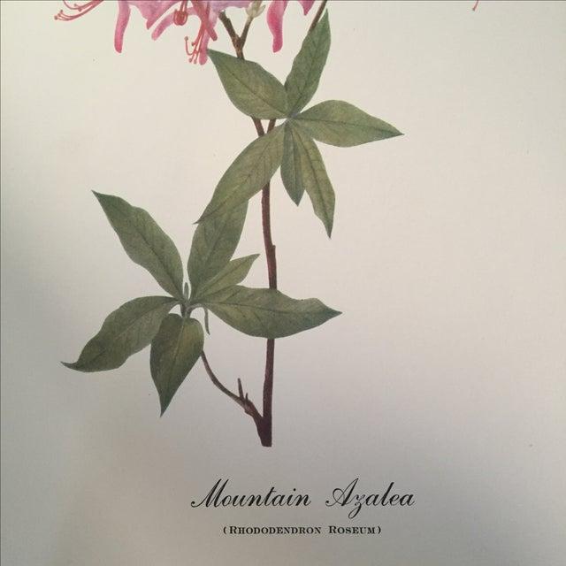 Mountain Azalea Botanical Print - Image 3 of 4