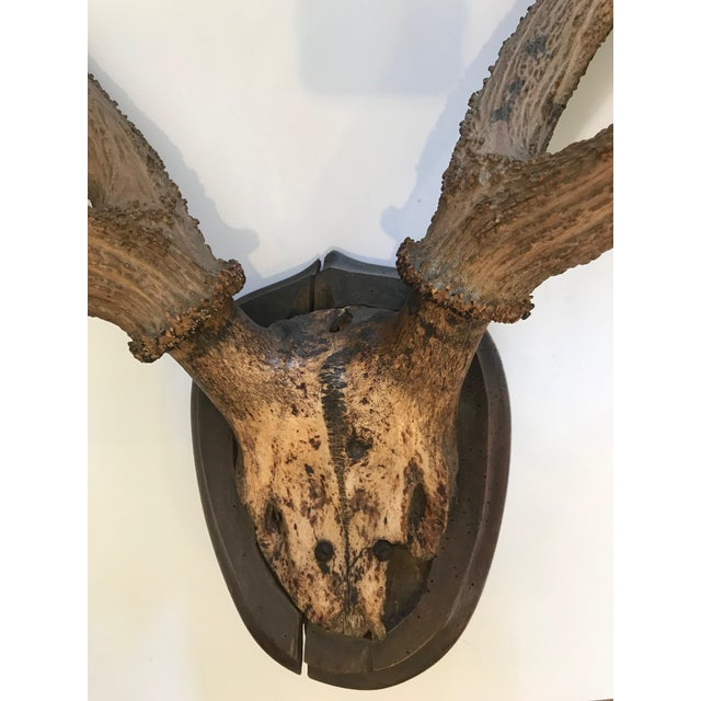 Antler Late 20th Century Mounted Horn Plaque For Sale - Image 7 of 13