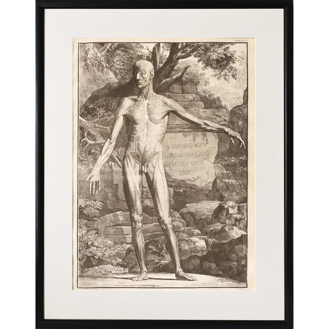 Antique Anatomical Engraving by Jan Wandelaar For Sale