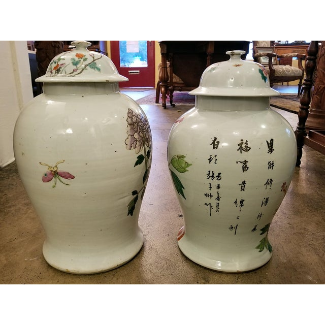 Qing Dynasty Lidded Ginger Jars - a Pair For Sale - Image 11 of 13
