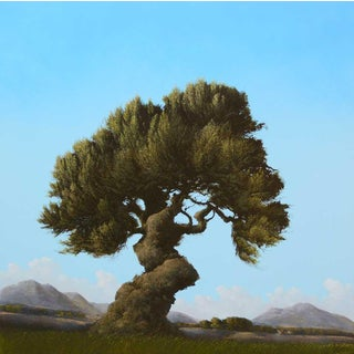'Veijo Arbol Espanol' by Robert Marchessault, 2019 For Sale