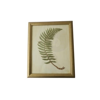 Vintage S. Novak Green Fern Pressed Botanical Print in Gold Frame For Sale