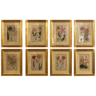 Johann Weinmann Eight Mezzo Tint Copper Plate Engraving Fine Frames For Sale