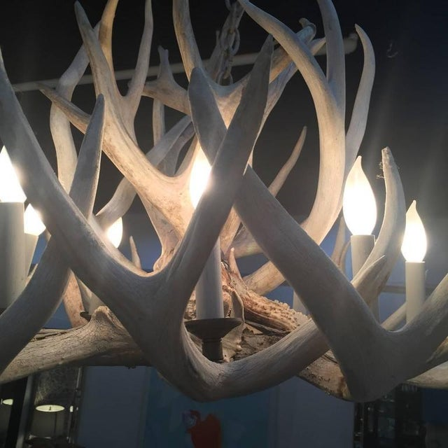 Antler Antique Bleached Antler Chandelier For Sale - Image 7 of 7