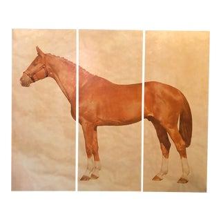 Horse Canvas Prints For Sale