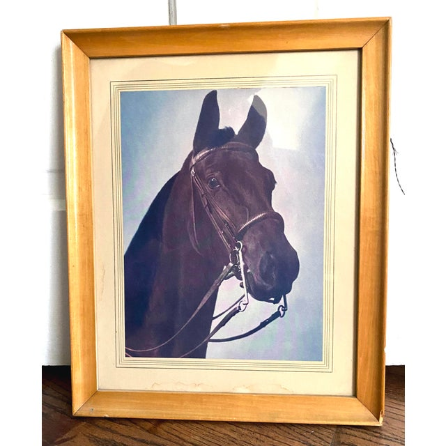 Vintage Horse Framed Photo. The matting is hand outlined and cut. Great vintage piece.