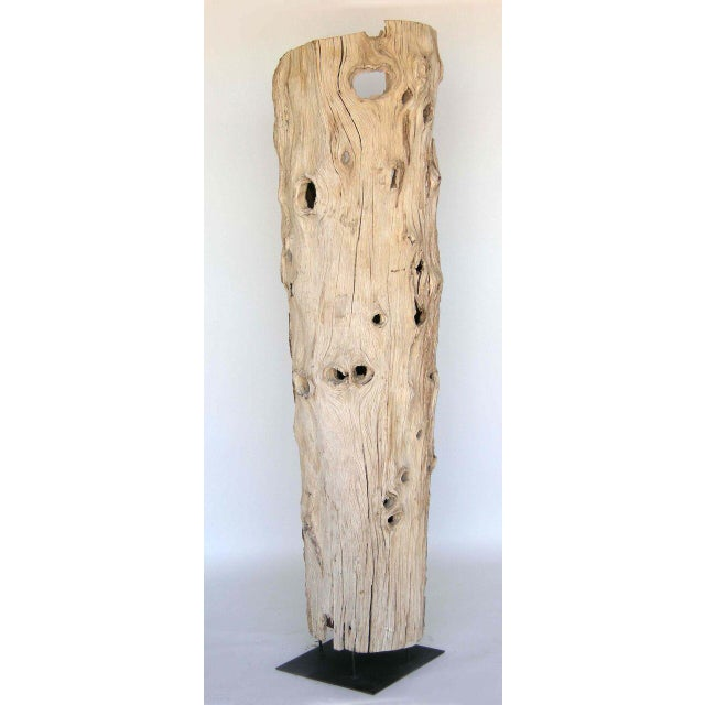 Early 20th Century Large Driftwood Tree Trunk Sculpture For Sale - Image 5 of 10