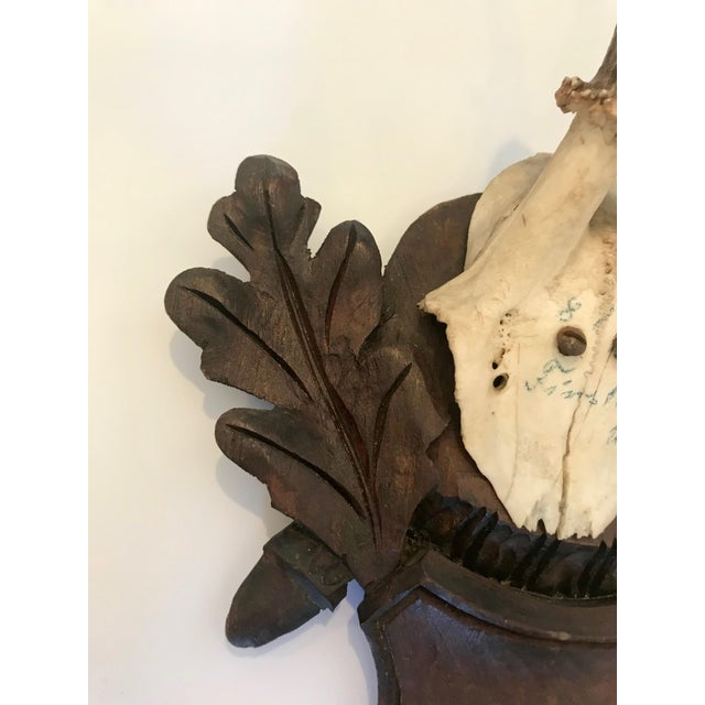 Late 19th Century Black Forest Antler Trophies Mounted on a Shield Back With Leaf Decoration For Sale - Image 5 of 13