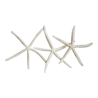 Large Natural White Starfish - Set of 3