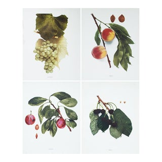 1900s Fruits of Ny Photogravures by Hedrick - Set of 4