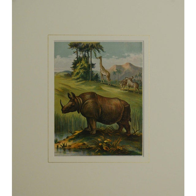 African Animals, 1886 Chromolithograph - Image 2 of 4