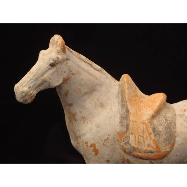 Tang Dynasty Painted Pottery Model of a Horse For Sale In Austin - Image 6 of 6