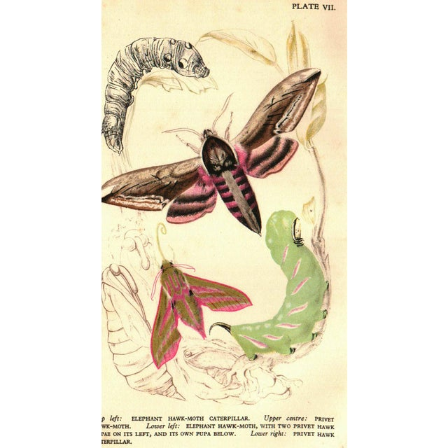 Butterflies And Moths in Britain by Vere Temple. London: B. T. Batsford Ltd, 1946. Second Edition. 120 pages. Hardcover in...