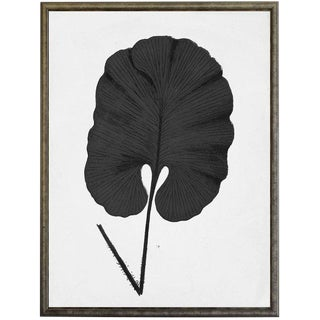 Black Cropped Leaf in Silver & Black Shadowbox - 23.25ʺ × 29.25ʺ