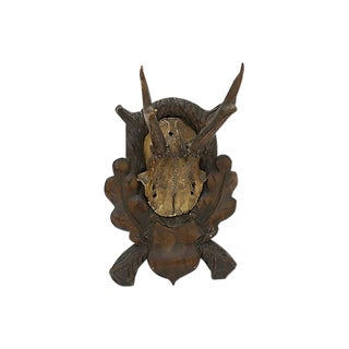 Antique Black Forest Mounted Horns