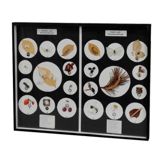 A Great Vintage School Teaching Display Vermins In The Garden And Forest For Sale