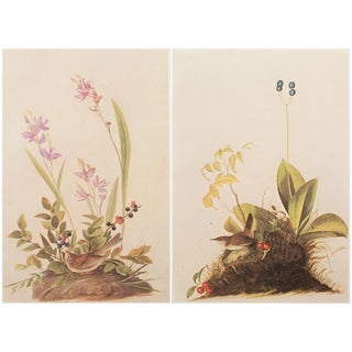 1960s Cottage Lithograph of Birds of America by John James Audubon - a Pair