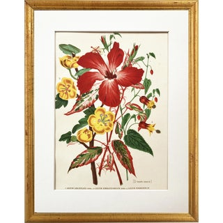 Antique Tropical Hibiscus Floral Botanical Print 1896 For Sale