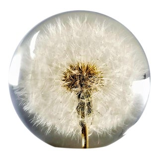 Vintage Lucite Sculpture Paperweight of a Dry Dandelion For Sale