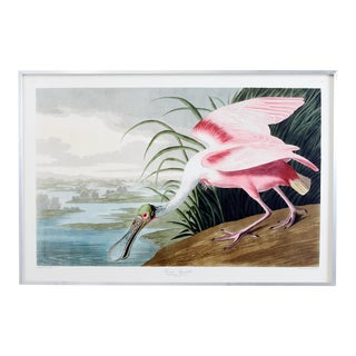 Audubon Roseate Spoonbill Plate #321 Havell Oppenheimer Edition For Sale