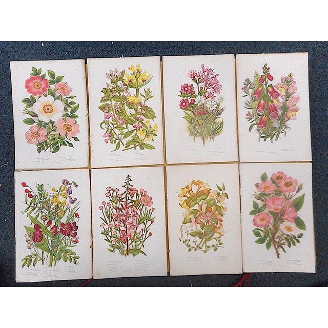 Realism Antique Botanical Lithographs - Set of 8 For Sale - Image 3 of 4