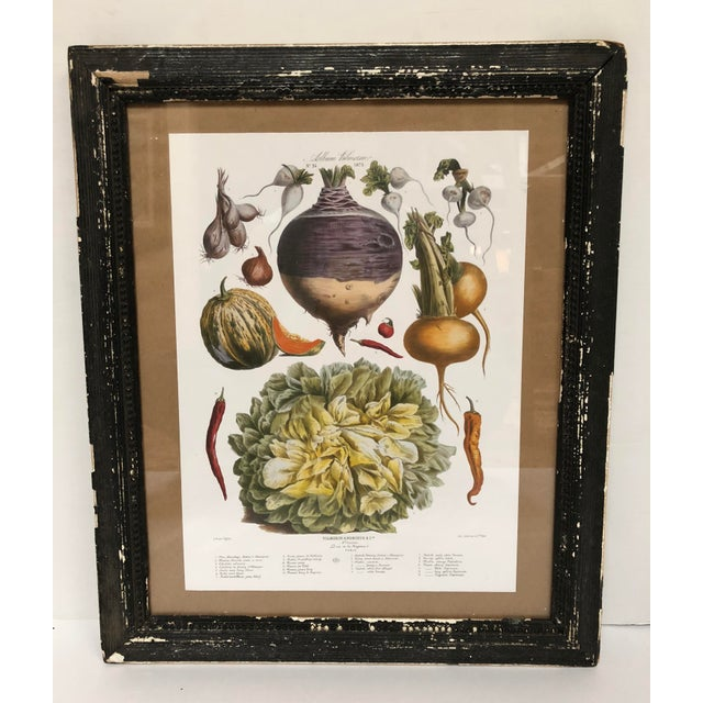 French Vintage French Botanical Prints in Rustic Wood Frames - a Pair For Sale - Image 3 of 13