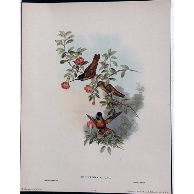 Hummingbird Lithograph by John Gould - Image 6 of 7